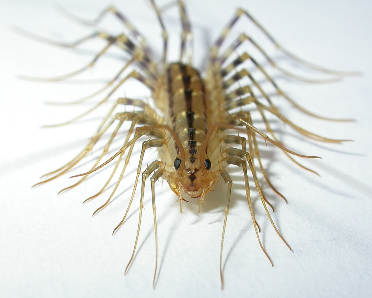 Silverfish probably aren?t going to be in your kitchen More likely